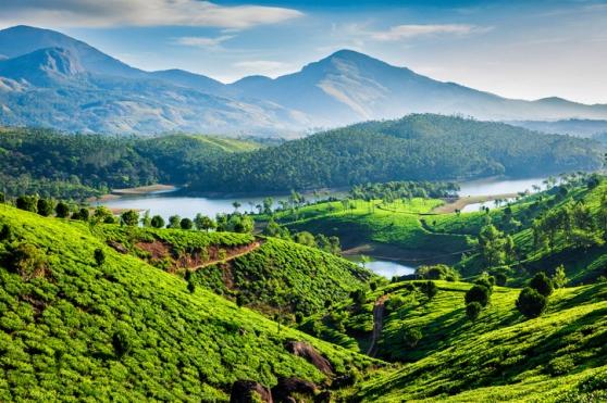 Tea plantations and Muthirappuzhayar River in hills near Munnar, Kerala, India