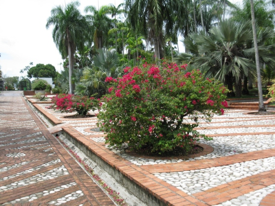 Flores en el Jardin Botanico, Santo Domingo.