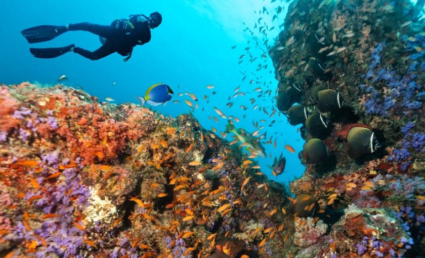 5 dos melhores destinos do mundo para mergulho  