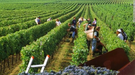 Bordeaux, das mais famosas entre as regiões produtoras do bom vinho, segue como um dos preferenciais para os visitantes estrangeiros (Fotos: Divulgação)