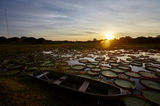 olhos-do-pantanal_por-do-sol-com-vitorias-regia