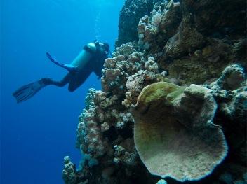MERGULHO no coral del Pacifico_el salvador